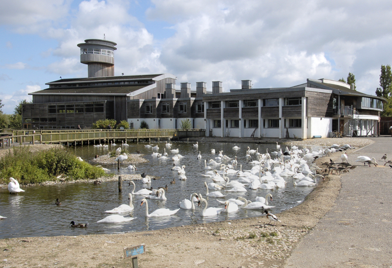 Slimbridge visitors centre.png